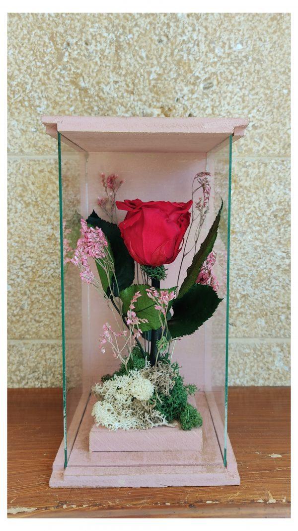 vitrina roz xryso red scaled